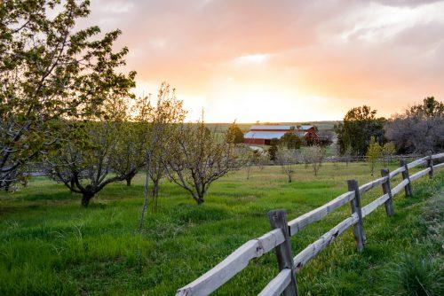 pretty-barn